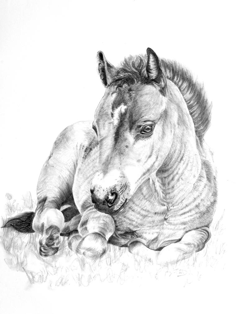 Foal - 6093