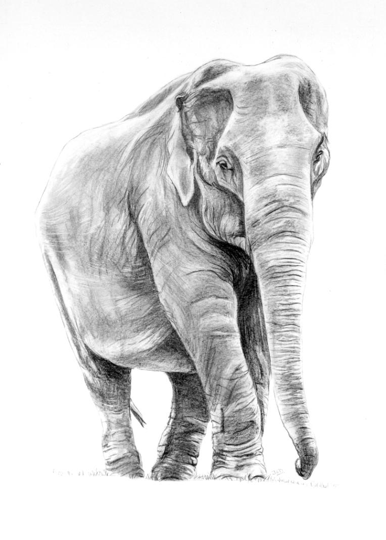 Elephant-6966